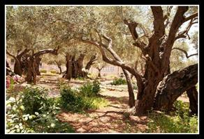 mi garden of gethesemane 03142016