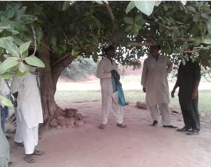 The tree where his body was found in Pakistan
