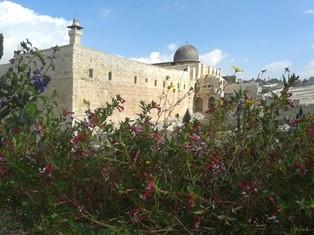 Al Aqsa smaller
