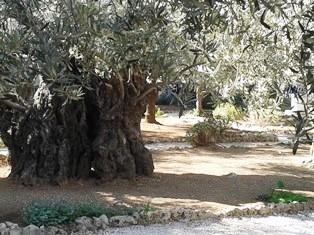 Gethsemane smaller