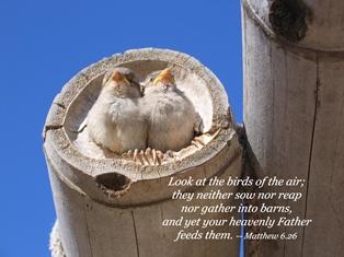 Matthew6 26 smaller