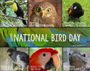 National Bird Day Picture smaller