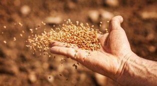 seeds 600x329 smaller